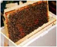 http://www.apiculture.com/rfa/articles/pictures/creer_colonnies_4.jpg