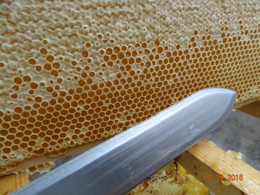 золотарник, Заволжье, противоаллергенный мед