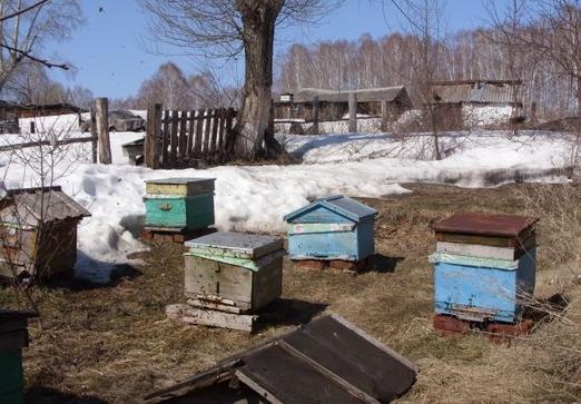кормление пчел в зиму в полиэтиленовых пакетах