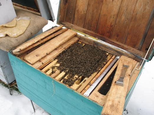 Подкормка пчел в конце зимы и рано весной