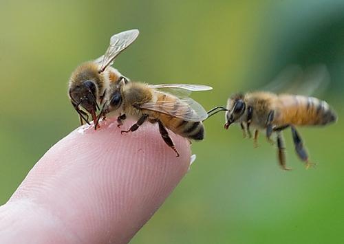 Азы пчеловодства или с чего начинается счастливая доля богатого пчеловода
