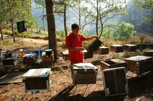 Пчеловодство Турции в цифрах и фактах