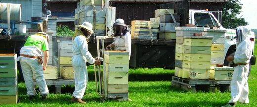 пчеловодство в канаде видео
