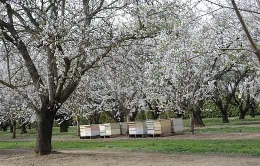 Стоимость опыления в 2016 году, опыление пчелами
