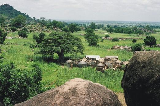 пчеловодство Ганы, Африка, Apis mellifera adansonii, экспорт в Европу