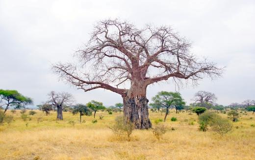 Производство органических пчелопродуктов в Замбии