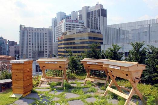 Южная Корея, рост пчеловодства, европейская пчела