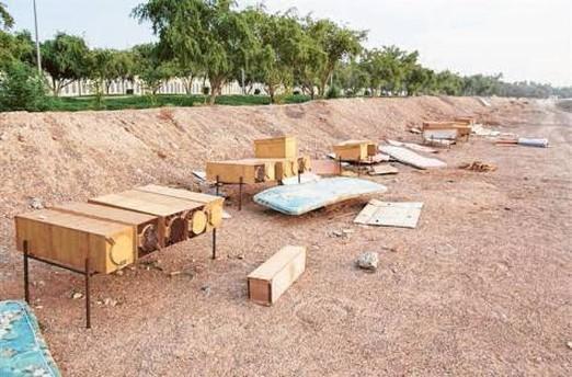 пчеловодство ОАЭ, фестиваль меда, ADFCA, диверсификация экономики, экспорт из России