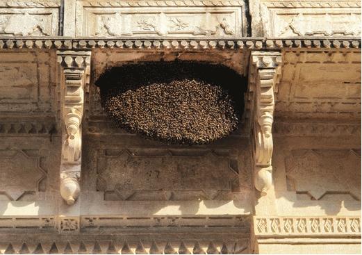 Индия: внутренний спрос на мед продолжает расти