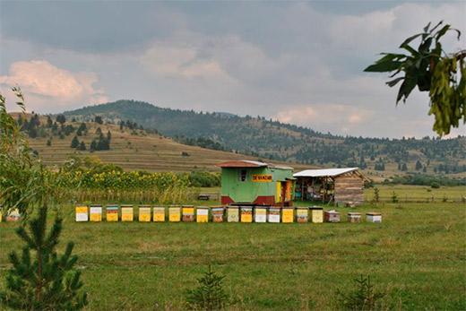 пчеловодство 2014 скачать торрент - фото 5