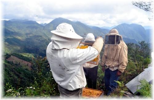 пчеловодство 2014 скачать торрент