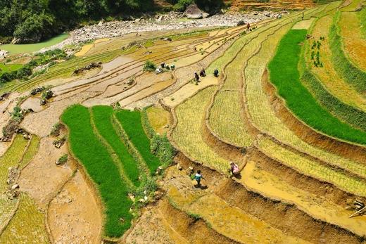 пчеловодство Вьетнама развивается