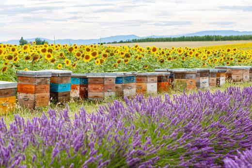 пчеловодство 2014 скачать торрент - фото 7