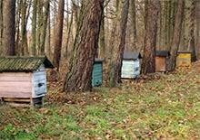 Экономические условия развития пчеловодства в Польше