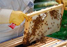 пчеловодство 2014 скачать торрент - фото 9