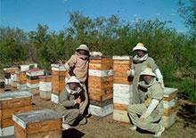 Пчеловодство Аргентины в 2013 году