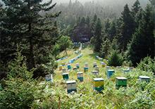 Греция в мировом пчеловодстве