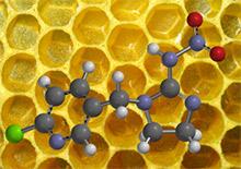 Кампания в защиту пчел от неоникотиноидов в США. А что в России?