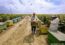 Украина. Производство и сбыт меда