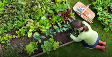 О развитии органического сельского хозяйства в России