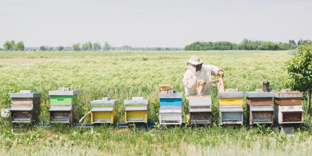 Количество пчелосемей в США остается стабильным