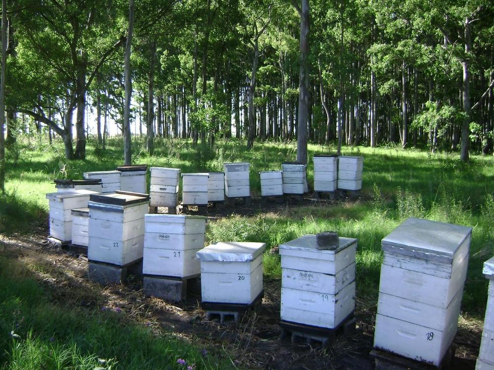 Обострение проблем пчеловодной индустрии Уругвая