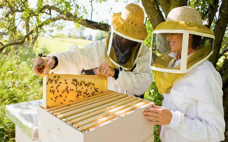 Меры борьбы с варроатозом пчел