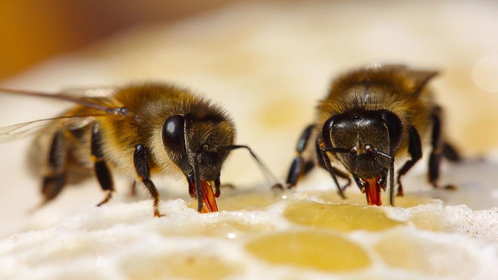 Пчеловодство России в зеркале российской и зарубежной статистики