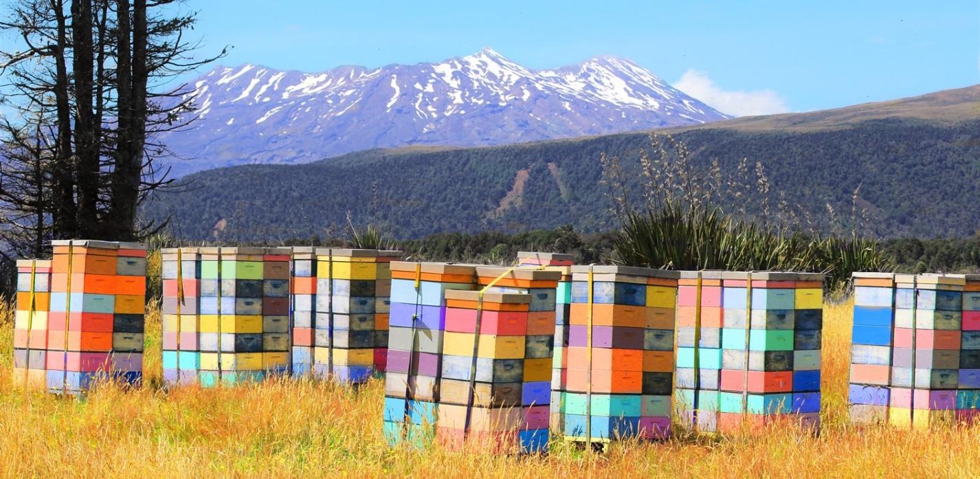Расстрел в Новой Зеландии Pinterest: Радикальные сдвиги в пчеловодстве Новой Зеландии