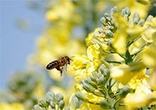 Весеннее развитие карпатских пчелосемей в Красноярском крае Март на пасеке, конец зимовки