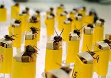 Медоносные пчелы защищают человечество
