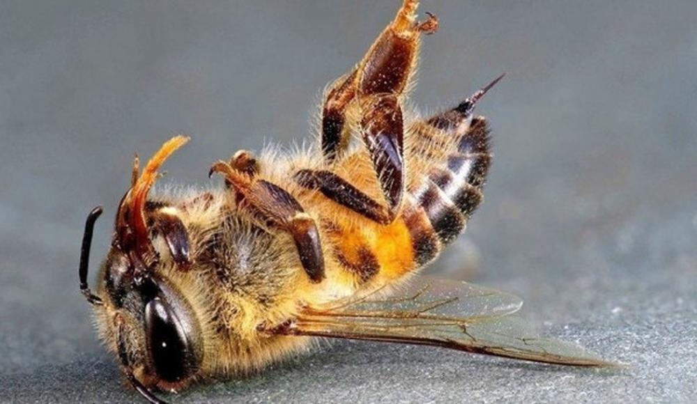 О реальном ущербе от гибели пчёл
